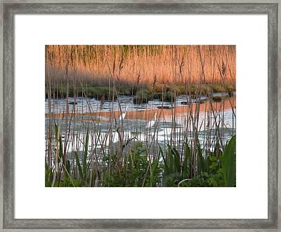 Egrets At Sunrise Framed Print by Donald Cameron