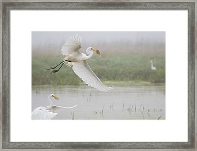 Egrets Fish Framed Print