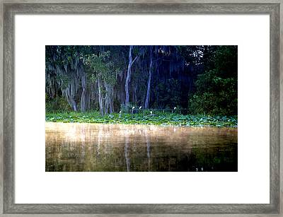 Egrets On A Fence Framed Print