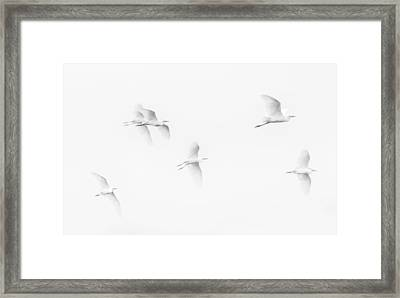 Egrets White On White B/w Framed Print