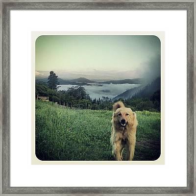 Egunon Chuvak! #dog #animal #pet Framed Print