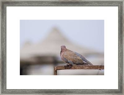 Egypt Framed Print by Be Lucca