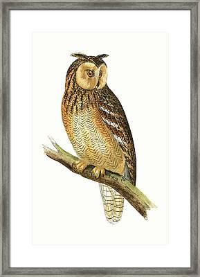 Egyptian Eared Owl Framed Print