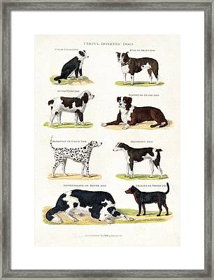 Eight Different Useful Domestic Dogs Framed Print