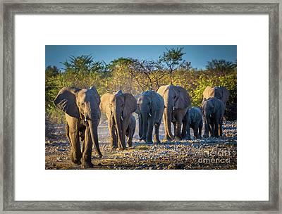 Eight Elephants Framed Print