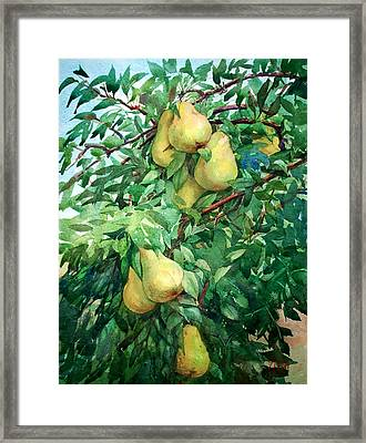Eight Pears Framed Print by Peter Sit