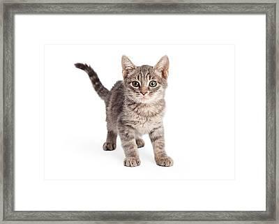 Eight Week Old Playful Tabby Kitten Framed Print