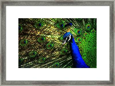 Eighteen Eyes Framed Print