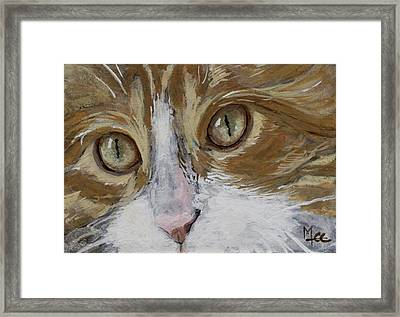 Einstein Framed Print by Mary-Lee Sanders