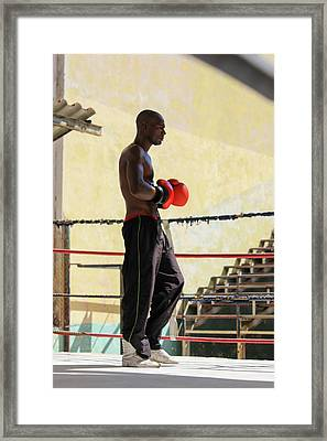 El Boxeador Framed Print by Dawn Currie