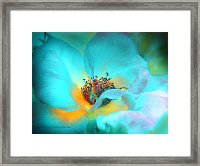 El Color De La Vida Framed Print