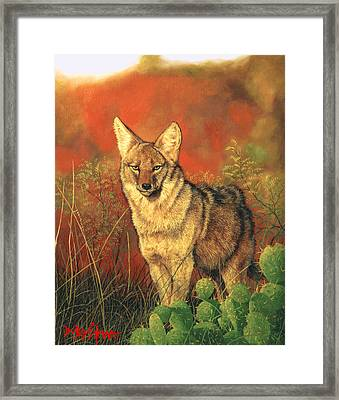 El Coyote Framed Print