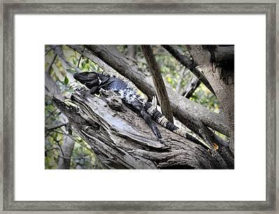 Framed Print featuring the photograph El Garrobo by Jim Walls PhotoArtist