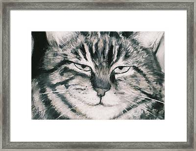 El Gato Framed Print by Billie Colson