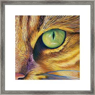El Gato Framed Print by Brian  Commerford