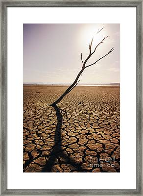 El Mirage Snag Framed Print by Larry Dale Gordon - Printscapes