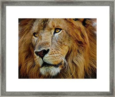 Framed Print featuring the photograph El Rey by Skip Hunt