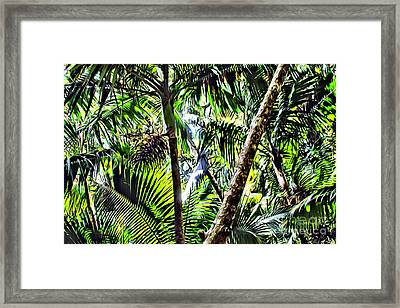 El Yunque Canopy Framed Print by Carey Chen