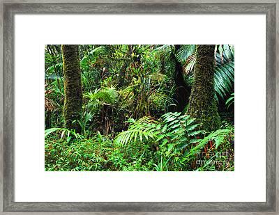 El Yunque Lush Vegetation Framed Print by Thomas R Fletcher