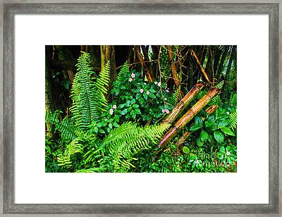 El Yunque National Forest Ferns Impatiens Bamboo Mirror Image Framed Print by Thomas R Fletcher