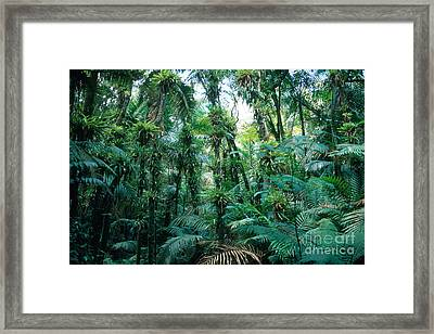 El Yunque National Forest Framed Print by John Kaprielian