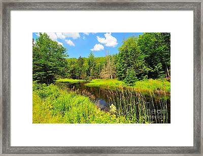 Elbow Pond Road  Framed Print by Catherine Reusch Daley