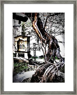 Elder Grapevine Framed Print by Mike Hill