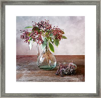 Elderberries 07 Framed Print by Nailia Schwarz