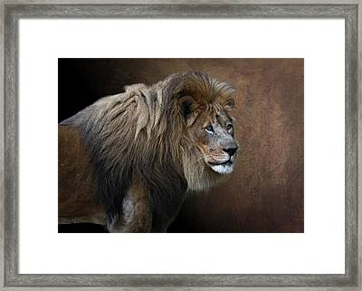 Framed Print featuring the photograph Elderly Gentleman Lion by Debi Dalio