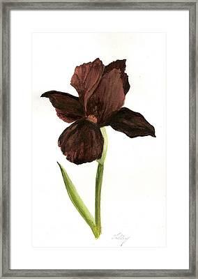 elderly Iris Framed Print by Susan Tilley
