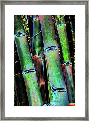 Electric Bamboo 4 Framed Print