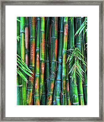 Electric Bamboo 6 Framed Print