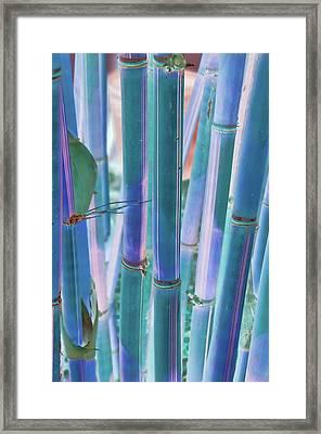 Electric Bamboo 8 Framed Print