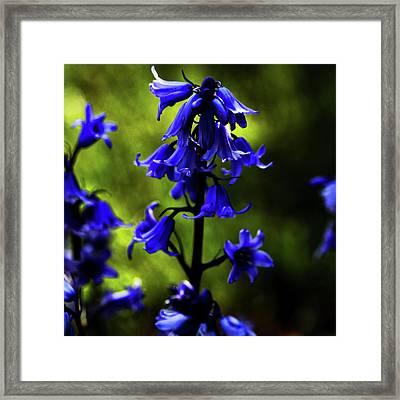 Electric Blue Framed Print by Bonnie Bruno