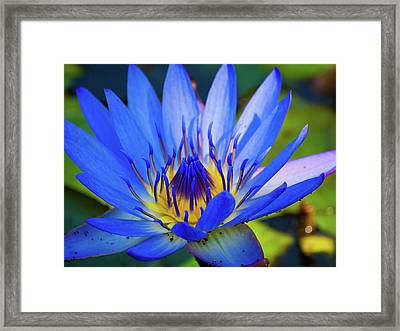 Electric Lily Framed Print