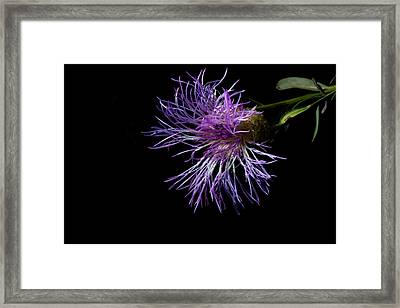 Electric Purple Framed Print by Eugene Campbell