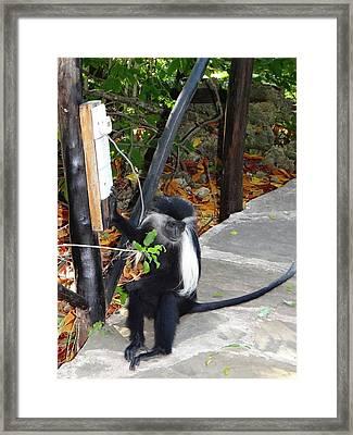 Electrical Work - Monkey Power Framed Print