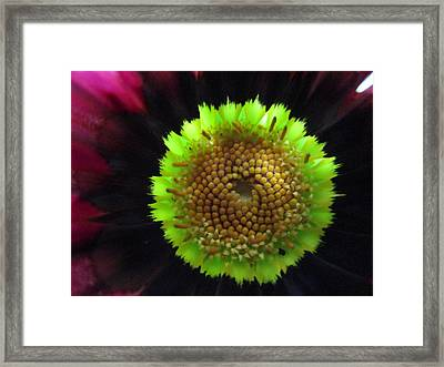 Electrified Framed Print by Rosita Larsson