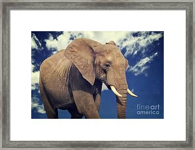 Elefanten Portrait Framed Print by Angela Doelling AD DESIGN Photo and PhotoArt