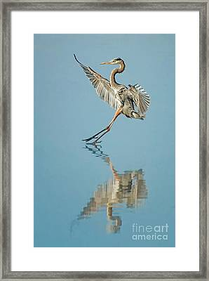 Elegance Framed Print by Alice Cahill