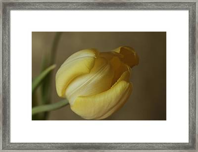Elegance  Framed Print by Connie Handscomb