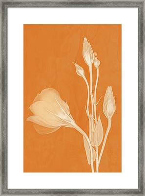 Elegance In Apricot Framed Print