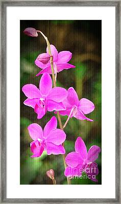 Elegance In Nature Framed Print by Sue Melvin