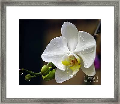 Elegance In White Framed Print