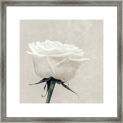 Elegance In White Framed Print