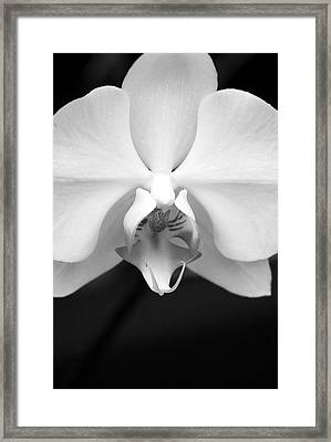 Elegance Framed Print by Sally Engdahl