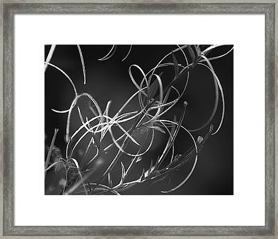 Framed Print featuring the photograph Elegance by Yulia Kazansky