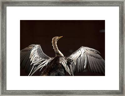 Elegant Anhinga Framed Print