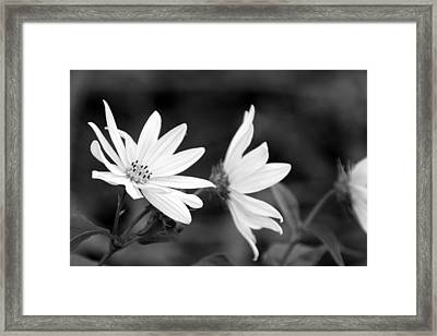 Elegant Asters Framed Print