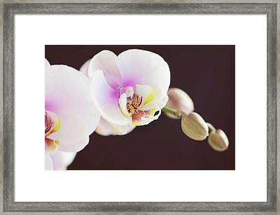 Elegant Beauty Framed Print by Dhmig Photography